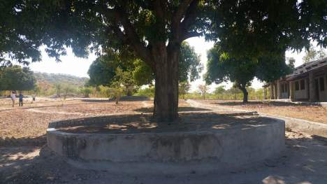 school mango tree